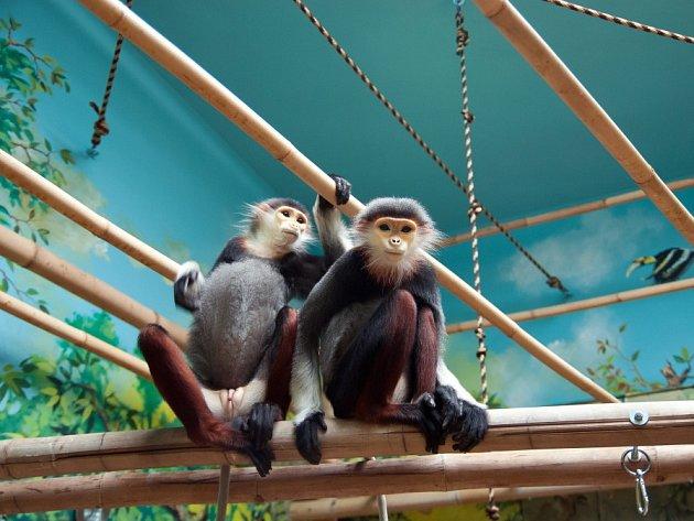 Vzácné opičky v Zoo Chleby budou slavit první Vánoce