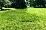 V Nymburce zůstávají ostrůvky s vyšší trávou pro hmyz.