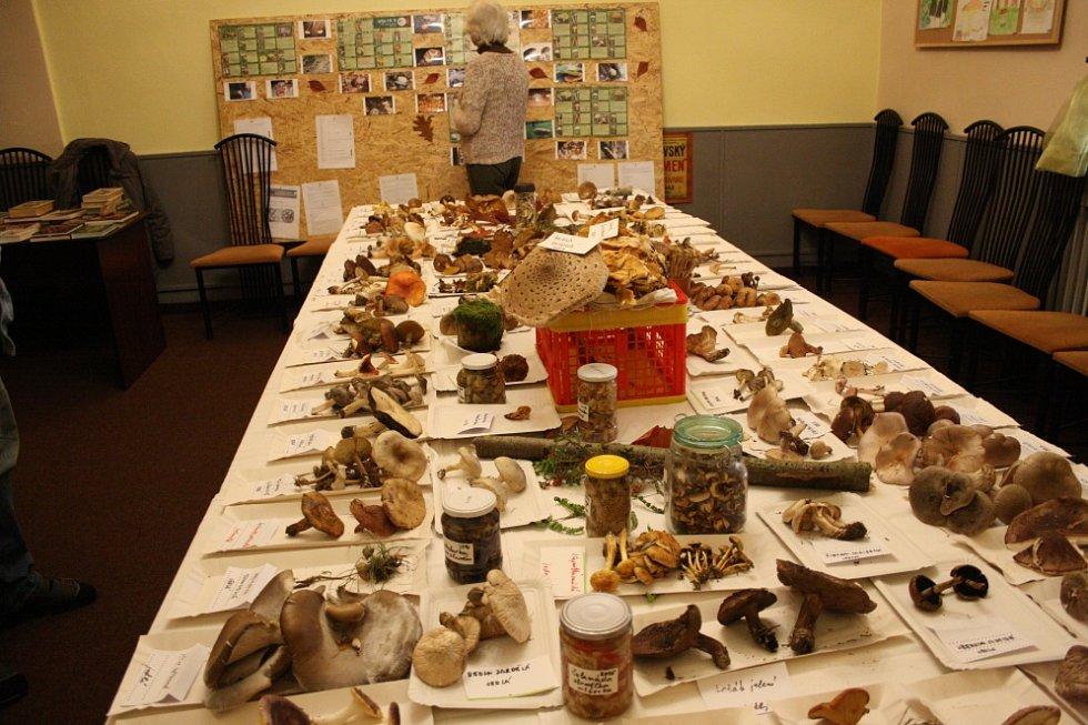 Výstava hub v Lysé nad Labem.