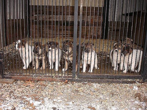 Devět odložených štěňat našlo dočasný domov v poděbrasdkém útulku.
