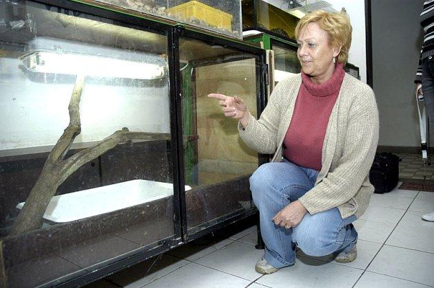 Prázdné terárium po více než dvoumetrovém hroznýši královském ukazuje Miroslava Havlová ze Stanice mladých přírodovědců Atol.