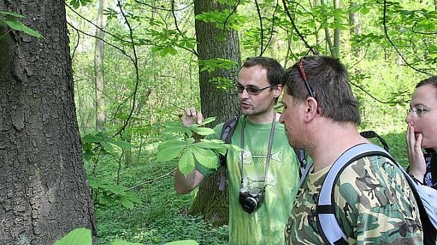 Mydlovarský les vydal své jarní poklady.