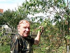 Na větvičkách stromku rostou mandle.
