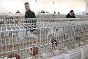 Výstava Náš chovatel nabízí každoročně přehlídku nejzajímavějších chovaných zvířat nejen z celého kraje.