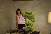 Patnáctiletý hloh i stoletý javor a další krásné bonsaje představil na faře v Činěvsi Luboš Šebek z Městce Králové.