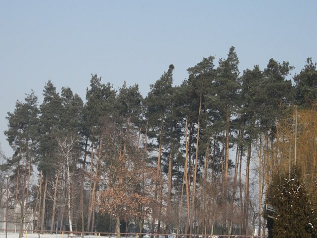 Borek v Sokolči