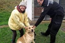Nová majitelka si vyzvedla labradora nalezeného před pěti měsíci.