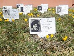 Krokusy před školou vykvetou jako jedny z prvních jarních květin.