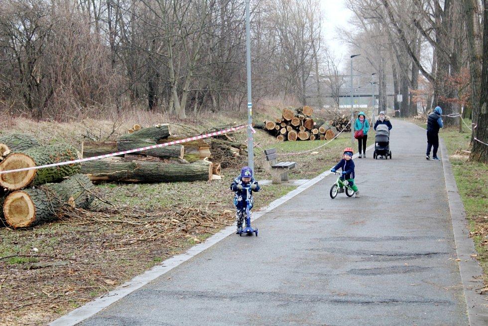 Situace u cyklostezky nedaleko Labe po třech dnech kácení.