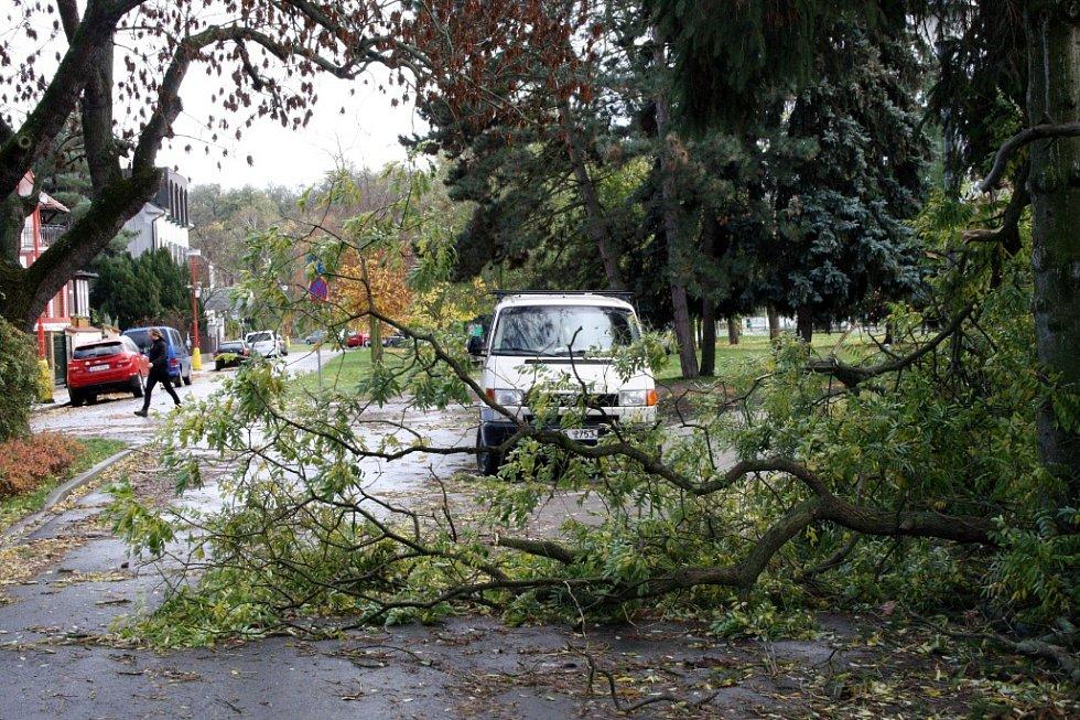 V Poděbradech v Labské blokoval provoz spadlý strom