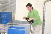 V Handicap centru Srdce pracují postižení