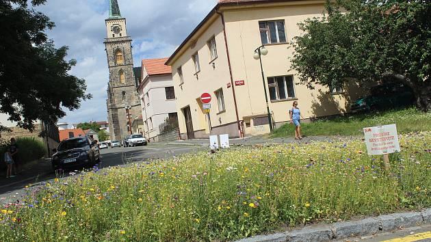 Podle vítězného návrhu by měly vzniknout podobné květinové louky jako loni na křižovatce pod soudem také v ulicích Pražská a Okružní.
