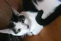 Kotě, které jeho majitelé v sobotu v Nymburce vpustili z okna. Přihlásí se nějaký lepší páníček?