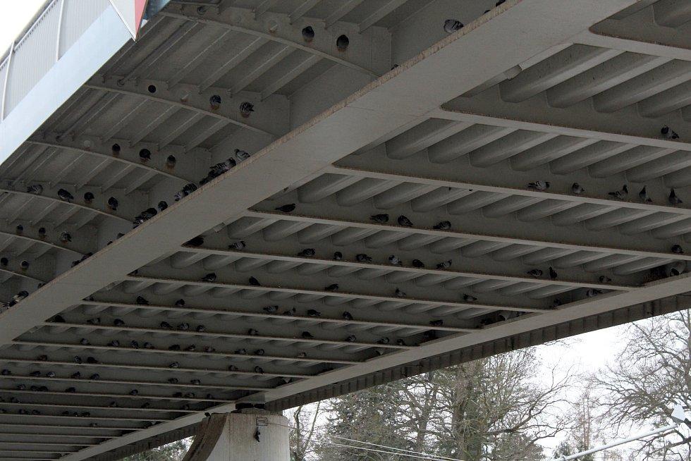 Na spodní konstrukci poděbradského mostu sedí denně stovky holubů. To chce radnice změnit.
