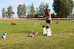 Kamenné Zboží přivítalo první závody v králičím hopu.