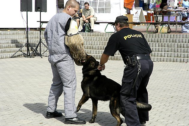 Součástí výstavy bývají i ukázky policejní práce.