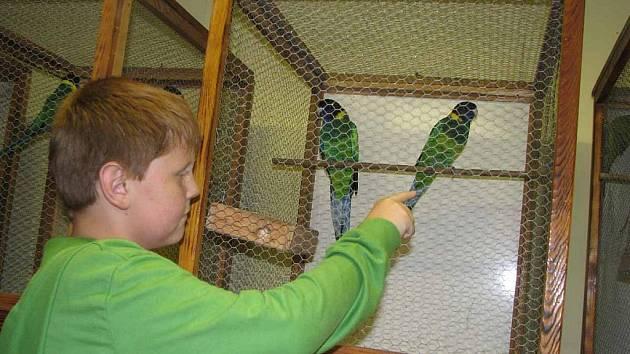 Výstava papoušků se koná na Moštárně