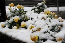 Krajina pod sněhem vypadá vždy trochu jinak. Zde je procházka v sobotní sněhové nadílce. Kde všude jsme fotili?