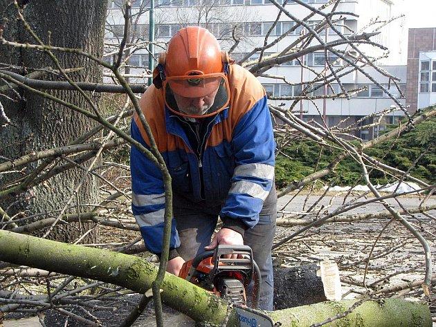 Technické prořezaly stromy v Parku svobody