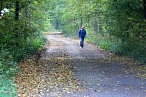 V lesích mezi Hradištkem a Sadskou se v pátek střílelo