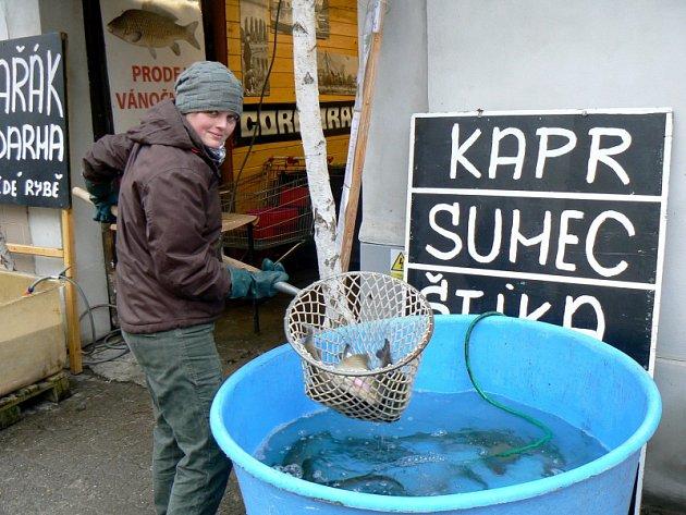 Ryby na štědrovečerní stůl jsou vprodeji například urybárny na Boleslavské třídě.