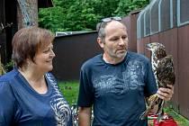Vzácného včelojeda se ve stanici v Huslíku podařilo zachránit a vypustit zpět do volné přírody.