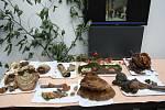 Výstava hub v Polabském muzeu