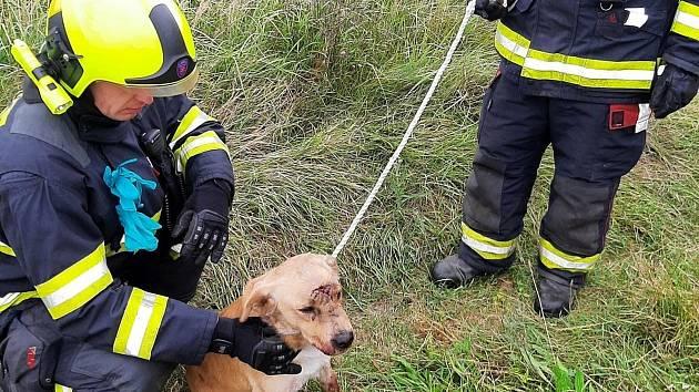 Drážní hasiči z Nymburka se zachráněným zraněným psem.