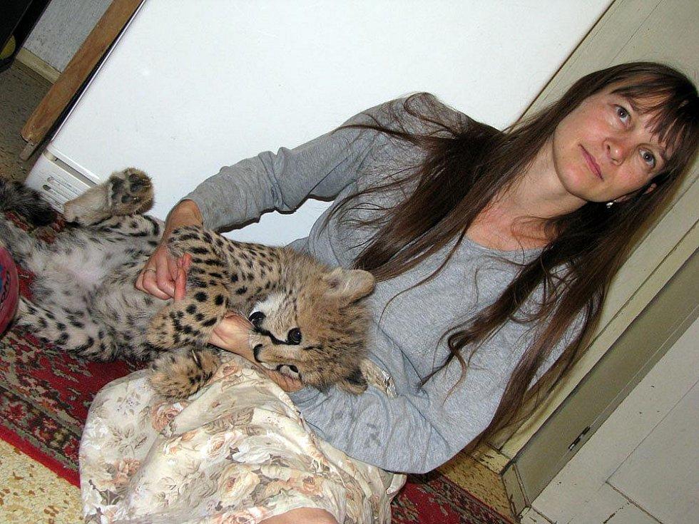 V chlebské zoo mají nový přírůstek. Tříměsíční gepardici Mzuri, která dokonce spí i v posteli.