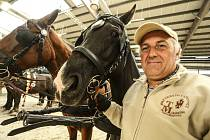 Na výstavišti v Lysé nad Labem začala výstava Kůň 2020.