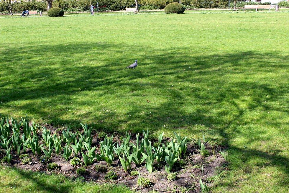 Lázeňský park na jaře. Brzy už po něm budou kroužit robotické sekačky.