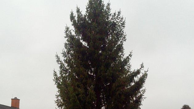 Lidé vybírali ten nejlepší vánoční strom na nymburské náměstí.