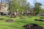 Ve střední části parku vznikají nové lesíky ze žlutě kvetoucích stromů gleditsií.