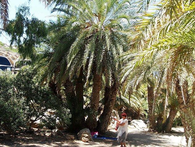 Při dalším putování jsme narazili na palmový háj a další památky.