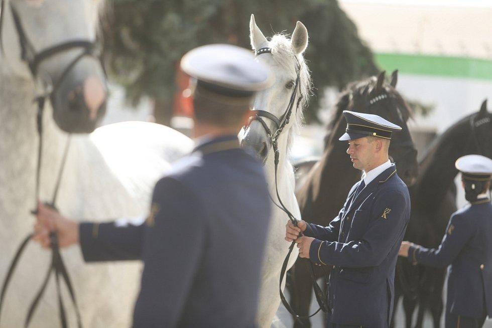 Z loňského ročníku veletrhu Kůň.