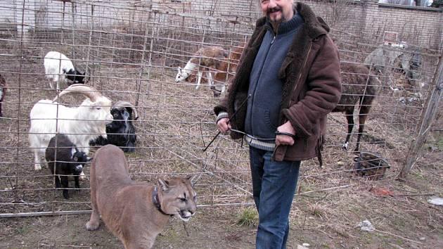 Randím s cougarem