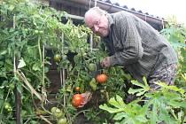 Zahrádkář Jiří Vrzal sklízel rajčata a papriky ještě v pátek