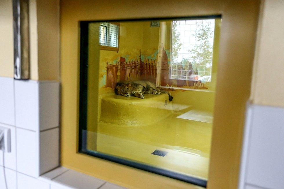 Z otevření lvince v chlebské Zoo.