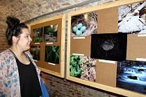 Výstava sdružení Cwak je otevřena až do konce září ve sklepích pod radnicí.