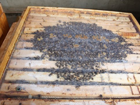 Včely jsou na trable nejlepší lék, tvrdí starostka Hořan