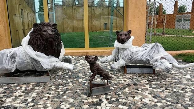 Z dokončování nového lvince v chlebské Zoo.