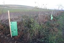 Neznámý pachatel kradl nově vysazené stromy také u Mečeříže