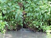 Místo, kde je trubka v břehu, těsně nad hladinou vody. Z ní nepravidelně vytékají smradlavé kaly.
