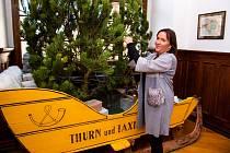 Z přípravy vánoční expozice na zámku Loučeň.