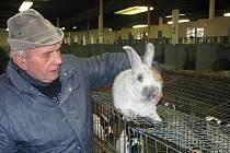 Ve Slovči se o víkendu konala výstava králíků, holubů, kohoutů a slepic.
