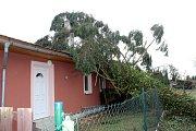 Strom spadlý na dům v Sadské.