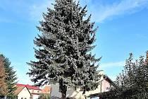Strom č. 3