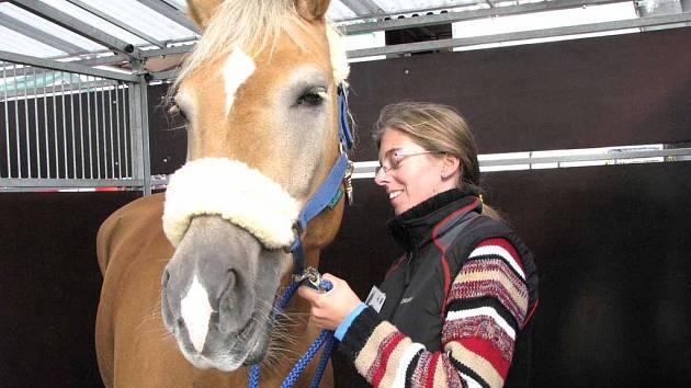 Výstaviště v Lysé nad Labem zve na výstavu Kůň