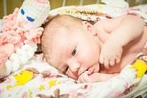 Kateřina Hříbková, Všechlapy. Narodila se 7. července 2020 v 13.44 hodin, vážila 3 640g a měřila 48 cm. Na prvorozenou holčičku se těšila maminka Pavlína a tatínek Petr.