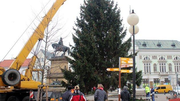 Vánoční smrk ze Sokolče už zdobí Jiřího náměstí v Poděbradech.